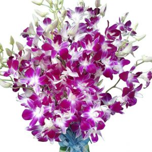 Purple Orchids in a vase, close up