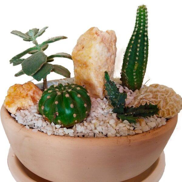 Cactus Garden Close-up