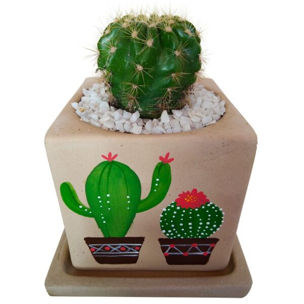 Cactus In Hand Painted Pot