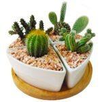 Cactus set of 4 close