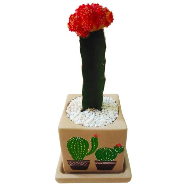 Chin cactus in a hand painted pot